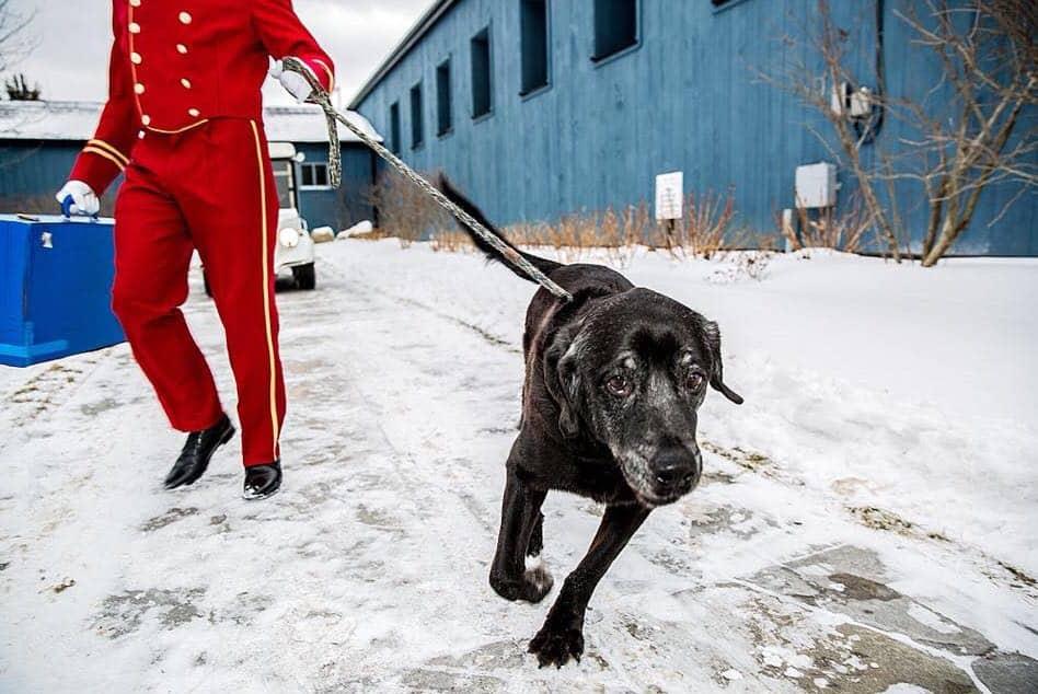 חוגגים את החיים בקנדה, צילום: באדיבות חוות dog tales rescue