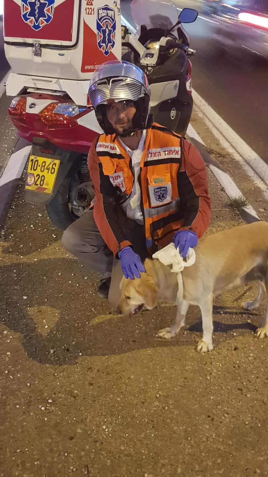 חובש איחוד הצלה עם הכלב בכביש 4 הלילה, צילום: באדיבות דוברות איחוד הצלה