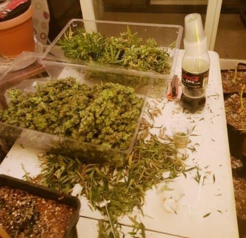 מעבדת סמים ברמת גן