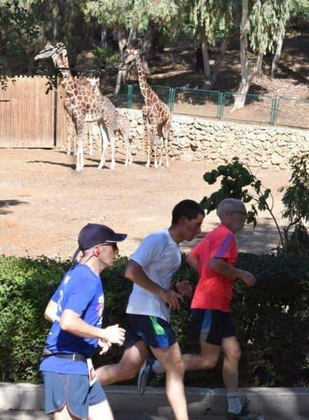 מרוץ הספארי. תמונות- ישראל מלובני
