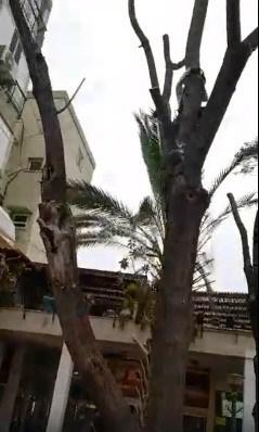 עץ מתוך הסרטון של נורית