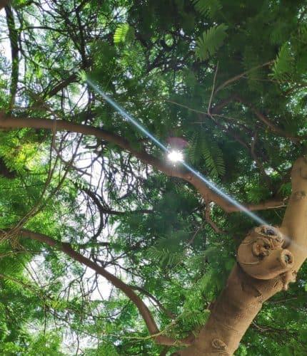 אלומת אור בין העצים צילום יעל קמר פריאל