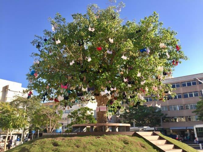 עץ החזיות של גבעתיים