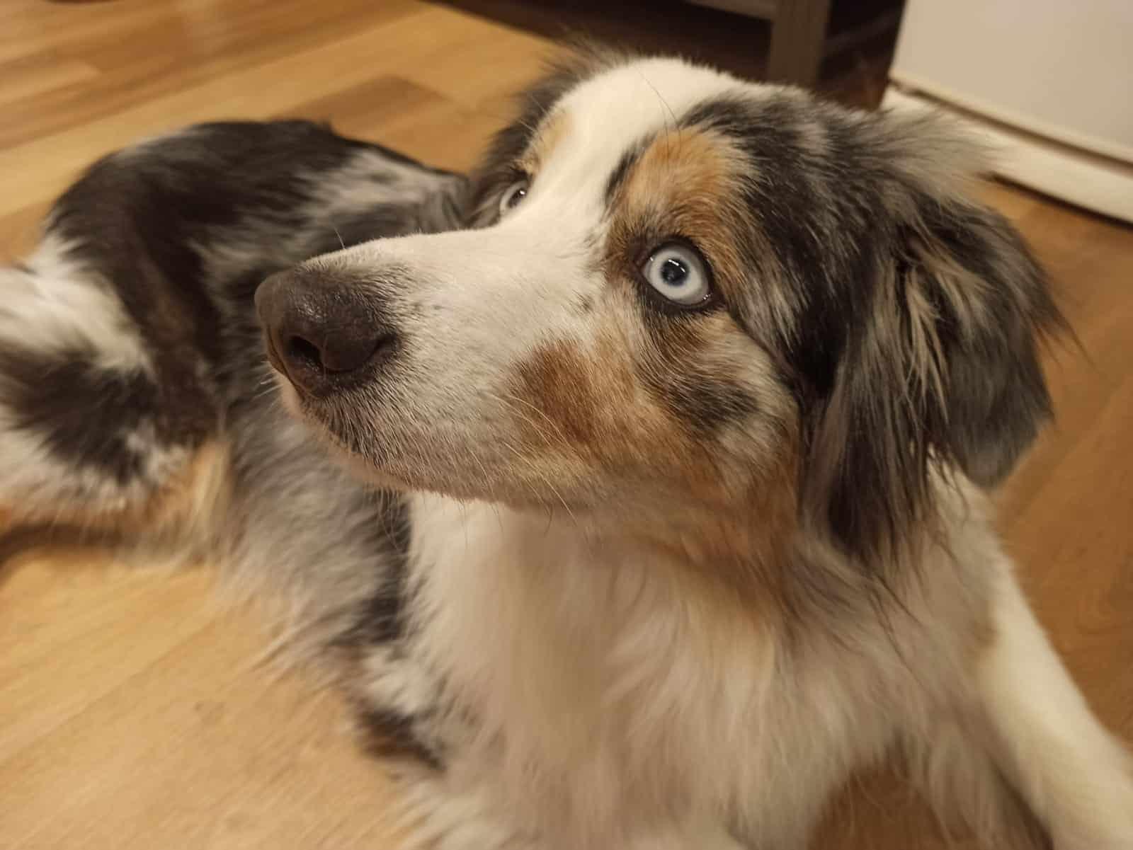 כלב צילום רג ניוז