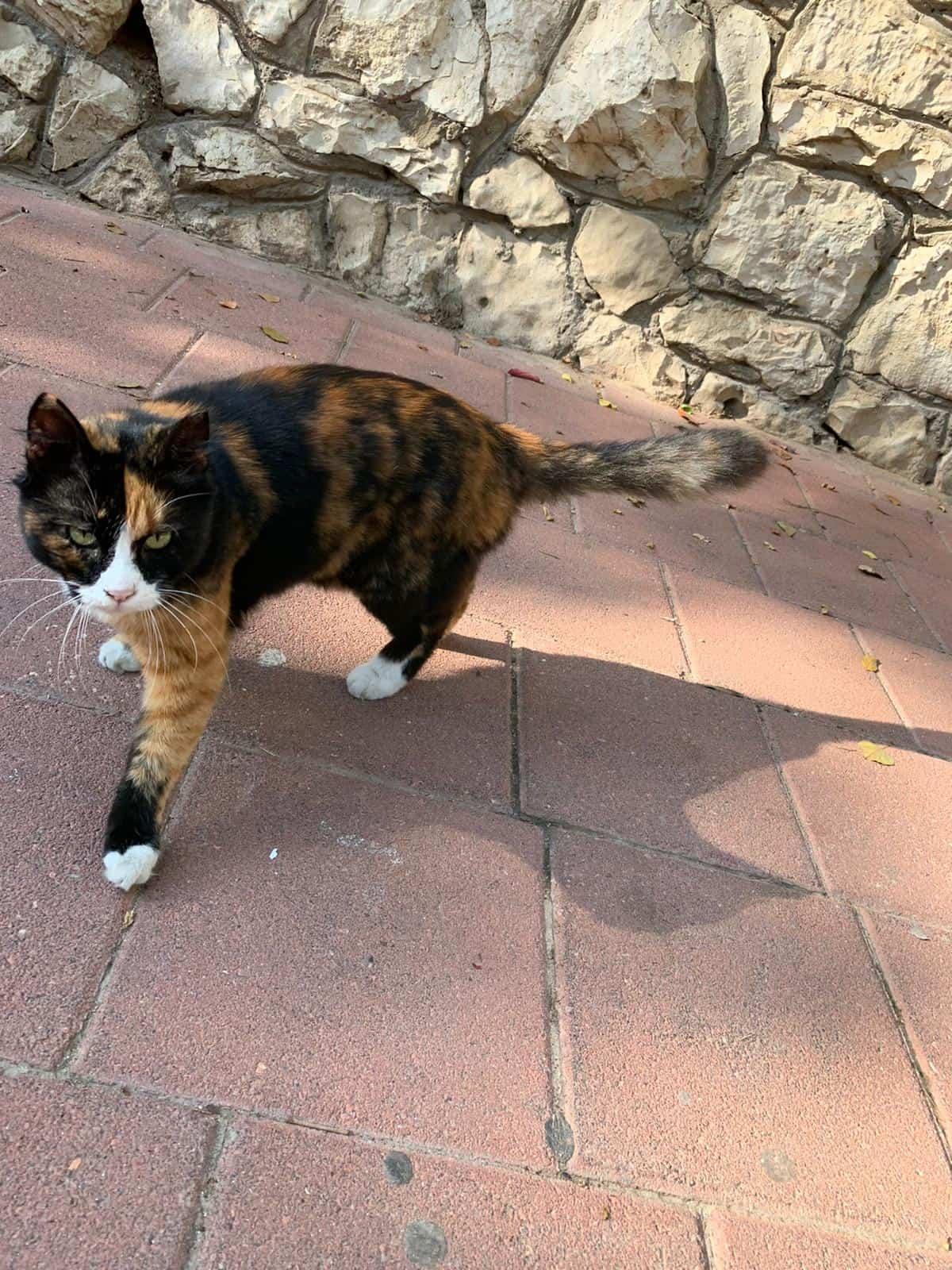 חתול רחוב. צילום: רמת גן גבעתיים ניוז