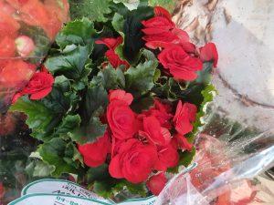פרחים צילום עיריית גבעתיים