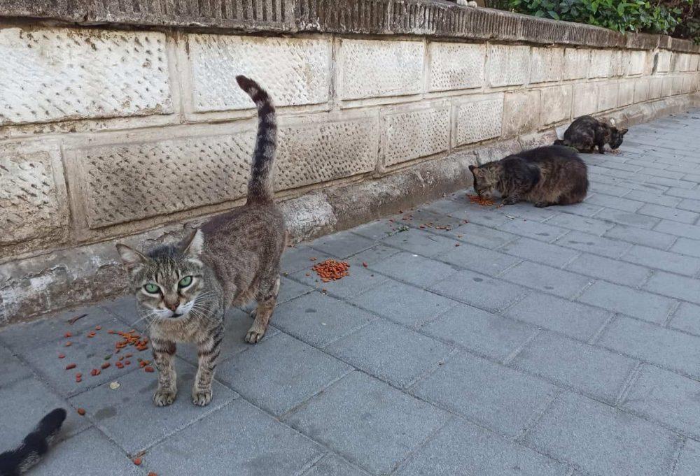 חתולים ברמת גן. צילום נטלי פורטי