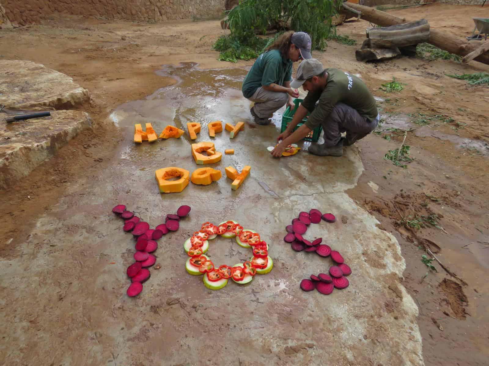 יום הולדת ליוסי הפיל ספארי רמת גן. צילום נועה טולדנו