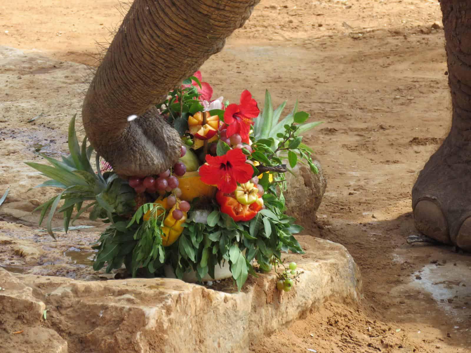 יוסי הפיל בן 46 ספארי. צילום נועה טולדנו