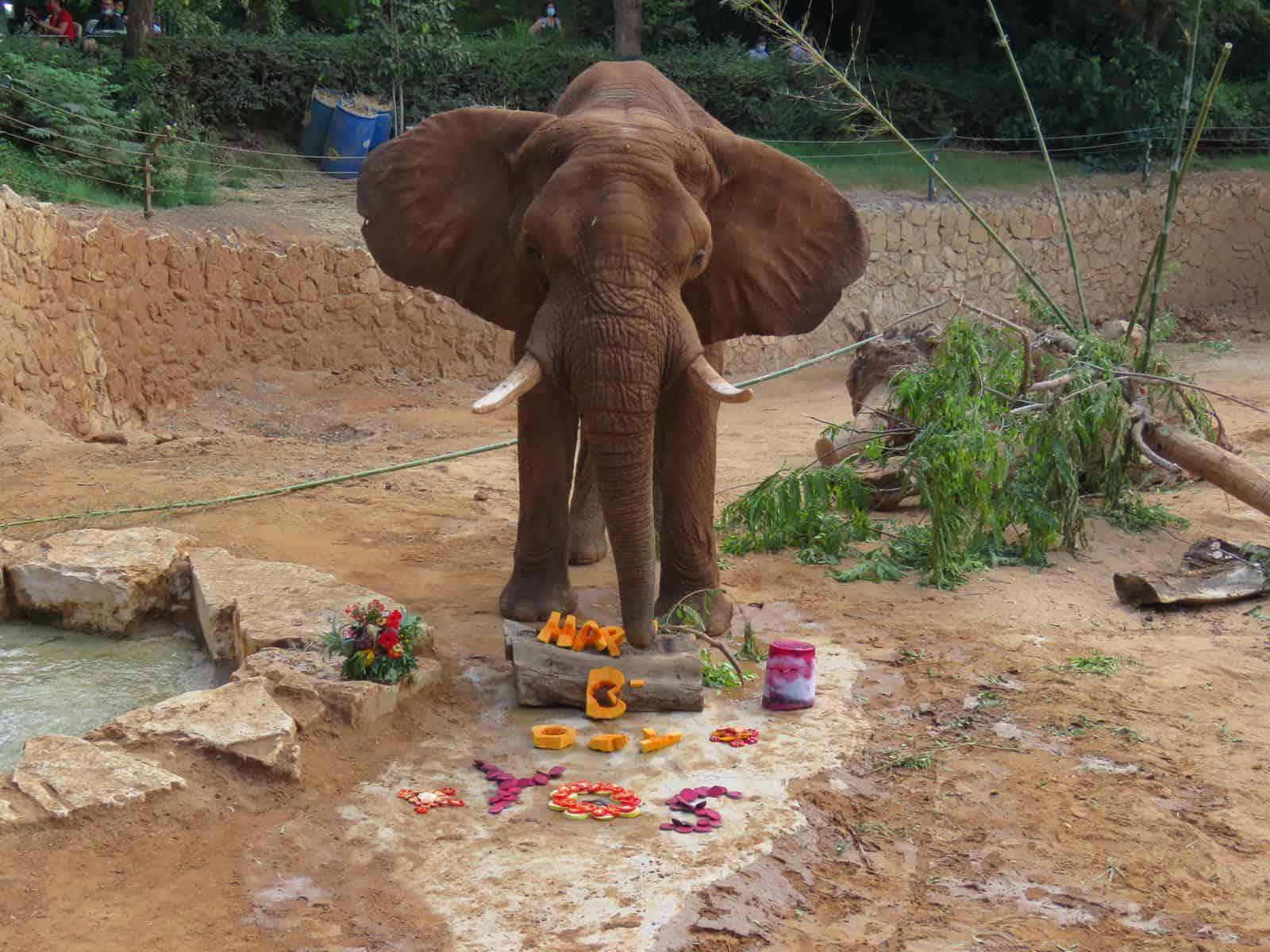 יוסי הפיל בן 46. צילום נועה טולדנו
