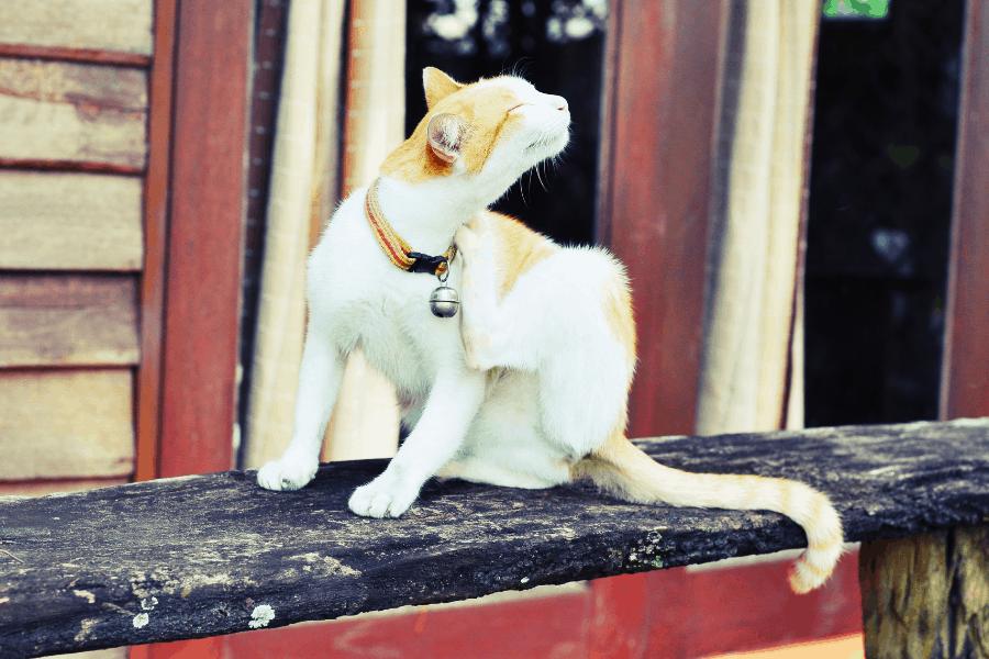 ליעד מרום- canva מתקן גירוד לחתול