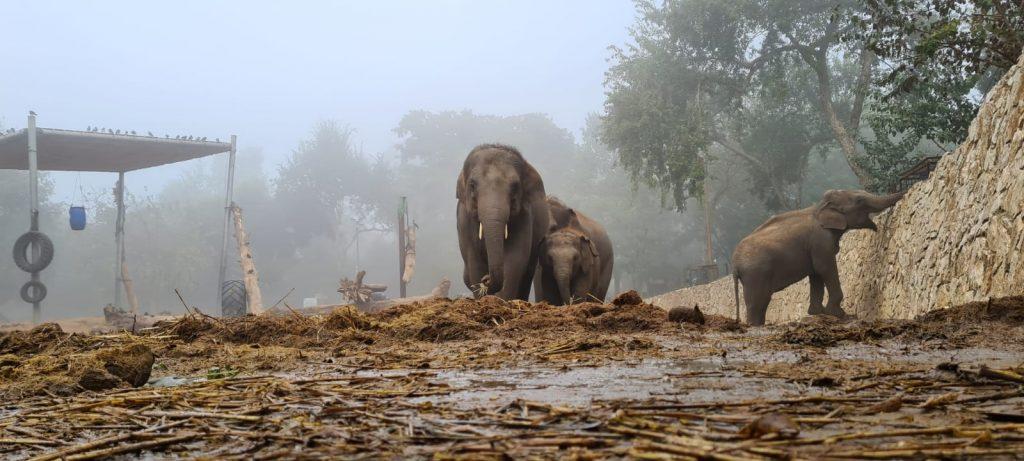 פילים בערפל