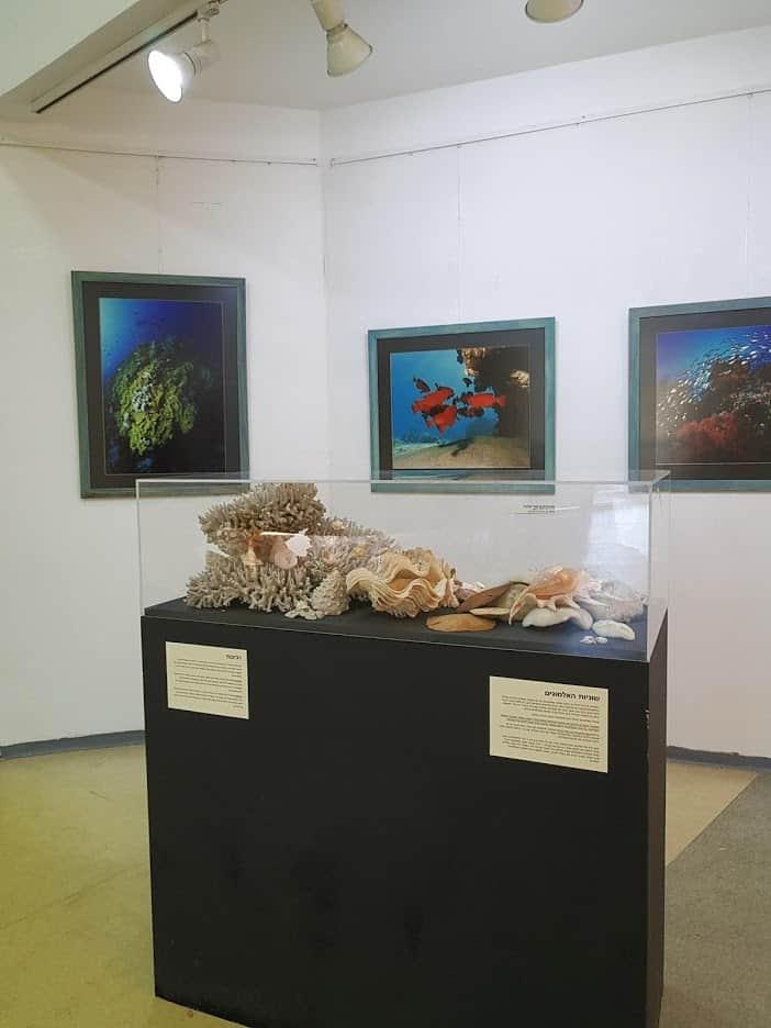 מפגש עם העולם התת ימי במוזיאון האדם והחי (צילום אסתי פרקל)
